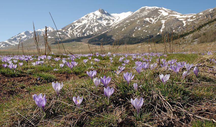 National Park of Abruzzo - Lazio e Molise
