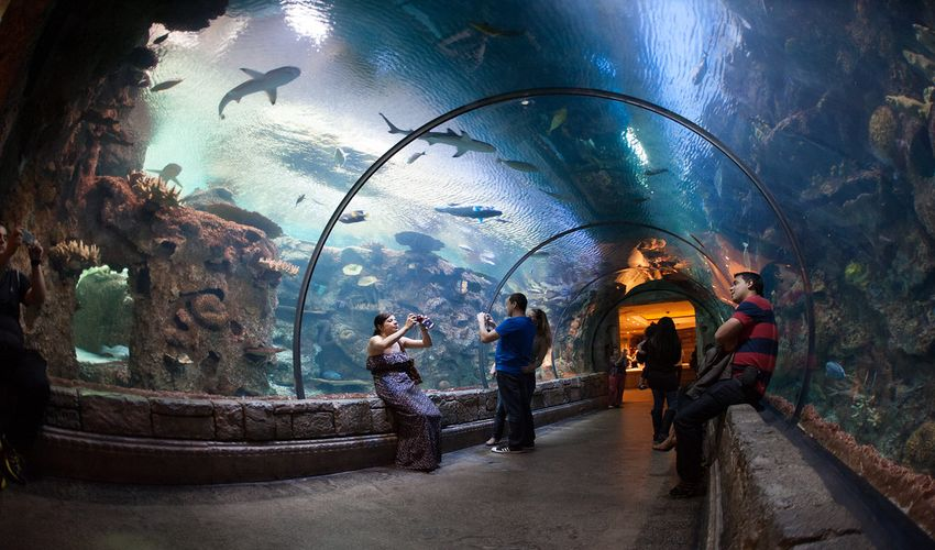 Shark Reef Aquarium at Mandala Bay