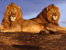 Canada's World-Famous Safari Tours